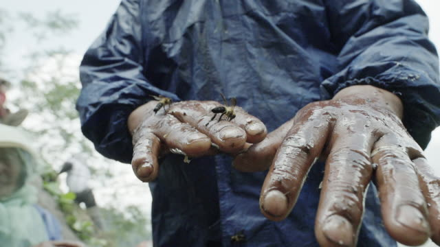 Nepalese honey farmer hands, close up slow motion