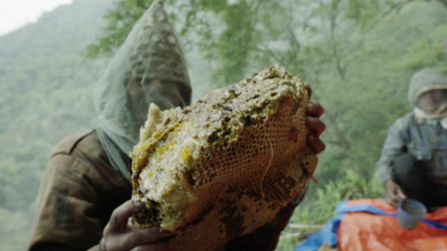 Nepalese honey farmer holds honeycomb, slow motion close up