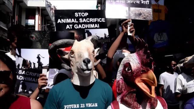 nepali activists rally in kathmandu calling for an end to religious animal sacrifices months ahead of a festival that in the past has seen tens of... - religious equipment stock-videos und b-roll-filmmaterial