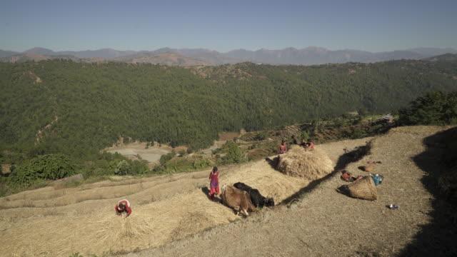 nepalesischen familie bereitet heuballen auf berg - nepal stock-videos und b-roll-filmmaterial