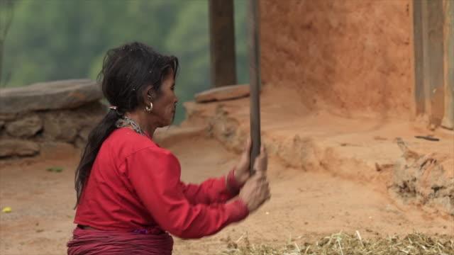 vídeos y material grabado en eventos de stock de mujer nepalí pega tierra con palo - palo parte de planta