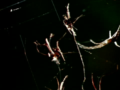 a nephila spider moves across a web. - invertebrate stock videos & royalty-free footage