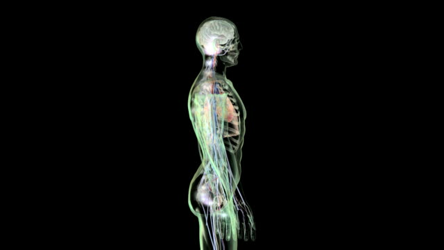 stockvideo's en b-roll-footage met nerve impulses to the brain - anatomie