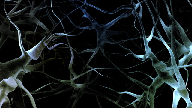 SEM Nerven Struktur