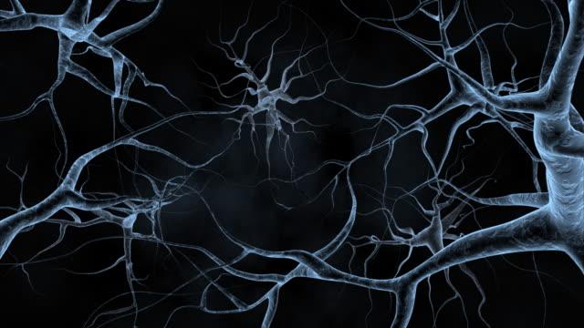 vídeos de stock, filmes e b-roll de nervos - micro organismo