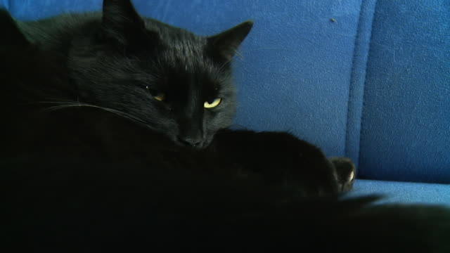 HD: Nervous Black Cat Trying To Sleep