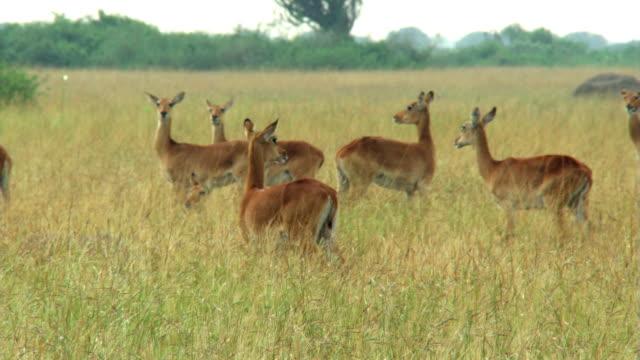 vídeos y material grabado en eventos de stock de nervous impala - artbeats