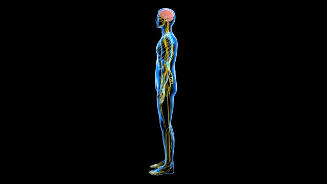 nervous system - image manipulation stock videos and b-roll footage