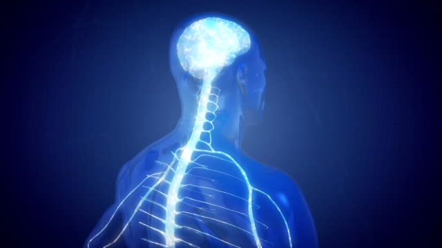 nervous system - human nervous system stock videos & royalty-free footage