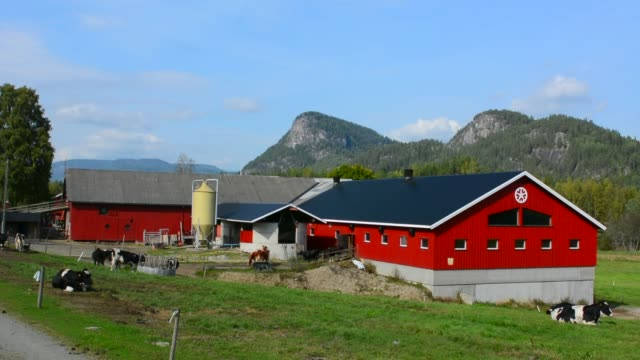 stockvideo's en b-roll-footage met nes norway red barn on dairy farm with cows and mountains - boerderijschuur