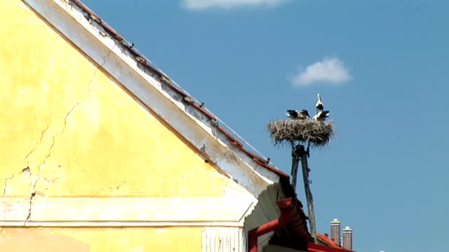 hd: nest of storks - animal creation stock videos & royalty-free footage