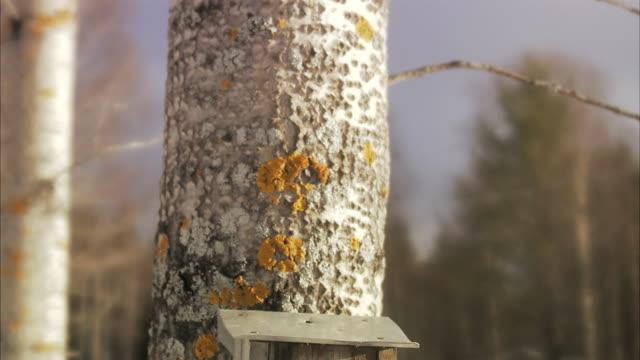 vídeos de stock e filmes b-roll de a nesting box in a tree norrland sweden. - tronco de árvore