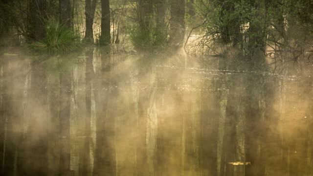 vídeos de stock, filmes e b-roll de netherlands, horst, swamp forest in nature reserve schuitwater. sunrise - pântano