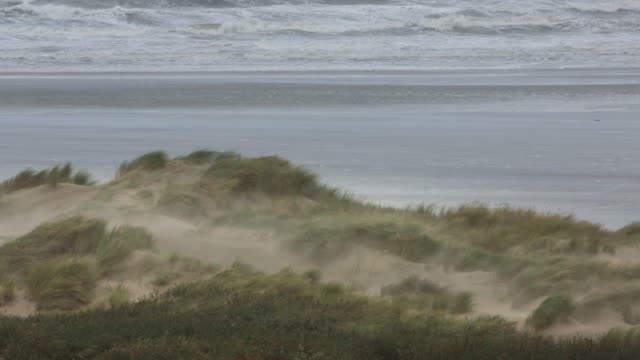 Netherlands, IJmuiden, Heavy storm on North Sea, Strong wind and blowing sand, Beach grass