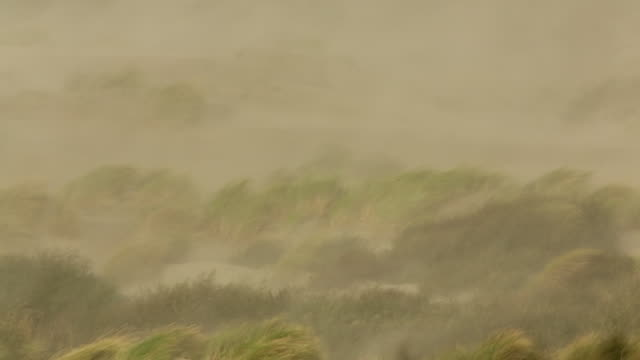 Netherlands, IJmuiden, Heavy storm on North Sea. Strong wind and blowing sand. Beach grass