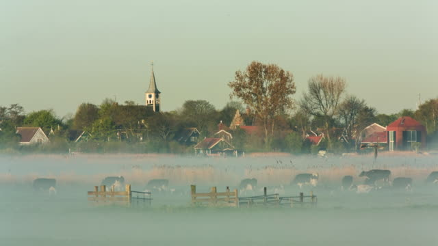 netherlands, jisp, skyline of village and cows. morning mist - morning stock videos & royalty-free footage