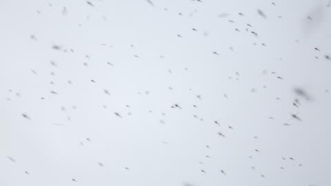 vídeos y material grabado en eventos de stock de netherlands, lelystad, national park oostvaardersplassen. mosquitoes - grupo grande de animales