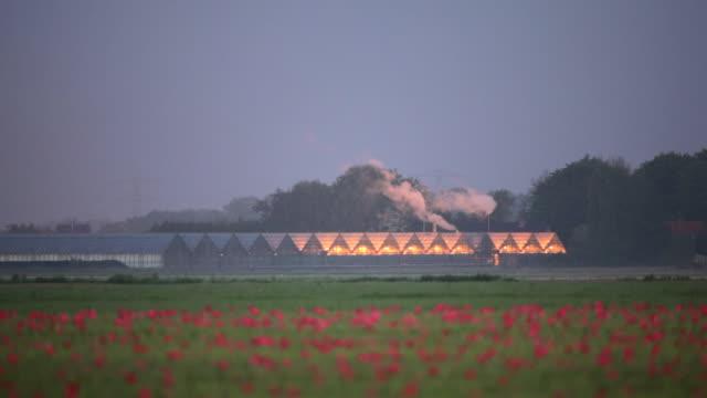 netherlands, marknesse, greenhouse with tulip field on foreground - gewächshäuser stock-videos und b-roll-filmmaterial