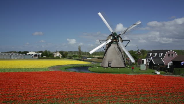 netherlands, noordwijkerhout, windmills near tulip field - netherlands stock videos & royalty-free footage