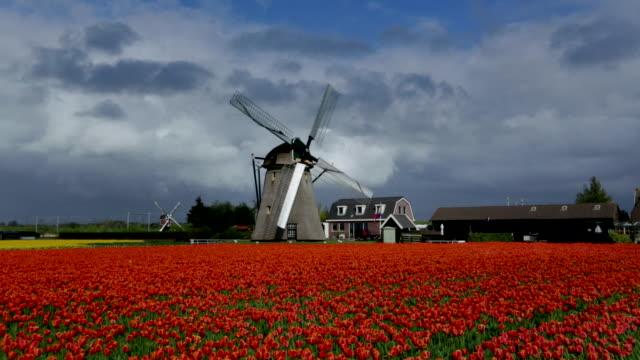 vidéos et rushes de netherlands, noordwijkerhout, windmills near tulip field - culture néerlandaise