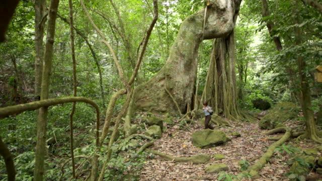 Netherlands, Oranjestad, Sint Eustatius Island, Dutch Caribbean. The Quill National Park. Woman hiking. Kapok or Silk Cotton Tree ( Ceiba Pentandra )
