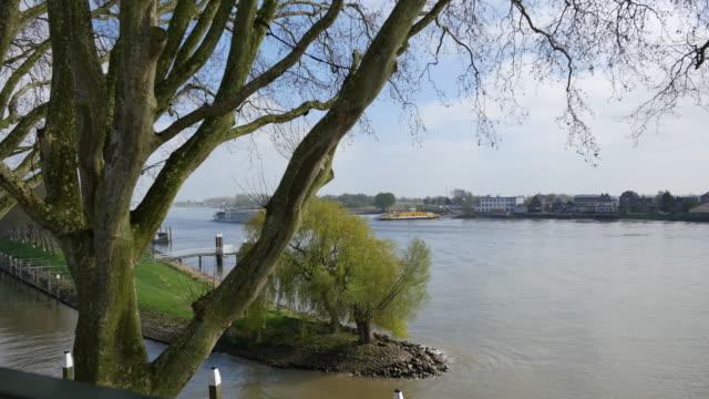 netherlands plane trees and river lek - lek stock videos & royalty-free footage