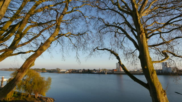 netherlands river lek view through plane trees - lek stock videos & royalty-free footage