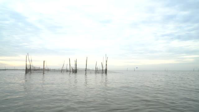 netting-falle in thale noi reservieren wasservögel - ruhige szene stock-videos und b-roll-filmmaterial