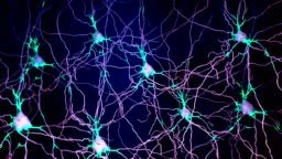 Neuron cell that transmits informations