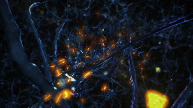 neuron cells. network connections. brain. medical background. blue. - human brain stock videos & royalty-free footage