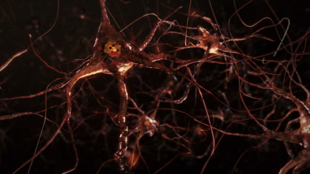 neuron cells, synapse. warm colors. network connections. brain. - anatomy stock videos & royalty-free footage