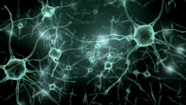 neuron network and synapse,inside the human brain,loop able - human nervous system stock videos & royalty-free footage