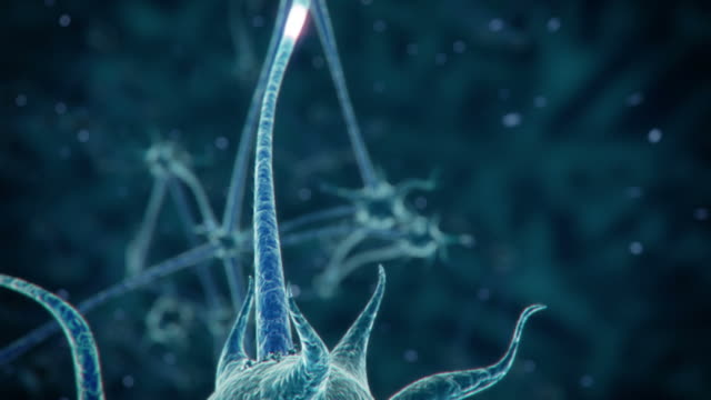neuron network - human nervous system stock videos & royalty-free footage