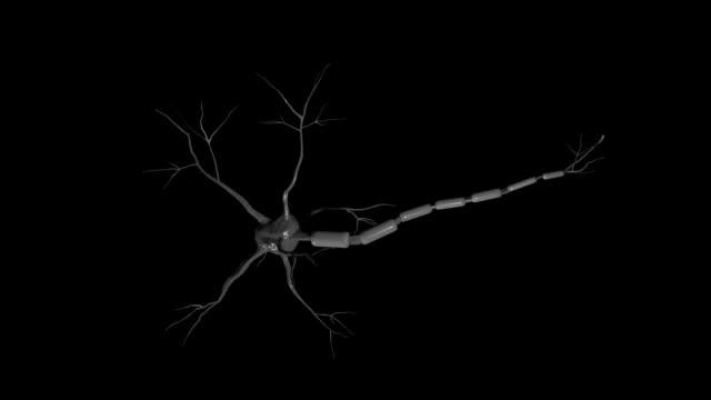 neuron - sensorisk impuls bildbanksvideor och videomaterial från bakom kulisserna