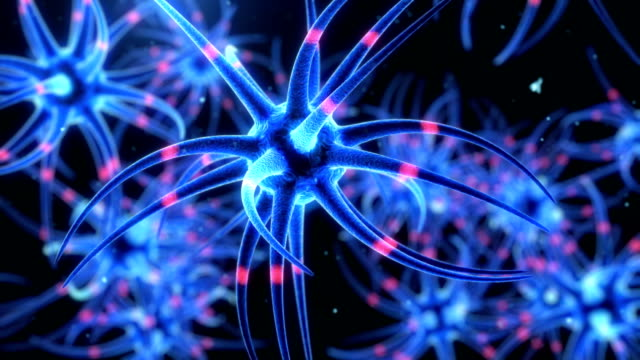 neurons and cell - human nervous system stock videos & royalty-free footage