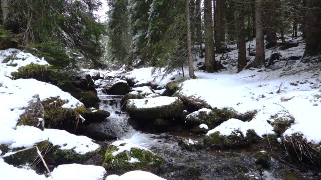 nevica in un bosco di pini con ruscello - dolomiti video stock e b–roll