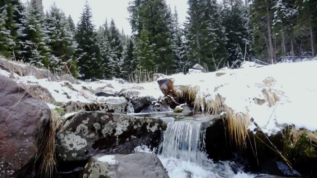 nevica in un bosco di pini con ruscello - neve stock videos & royalty-free footage