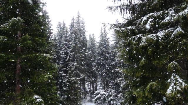 nevica in un bosco di pini - トレンティーノ点の映像素材/bロール