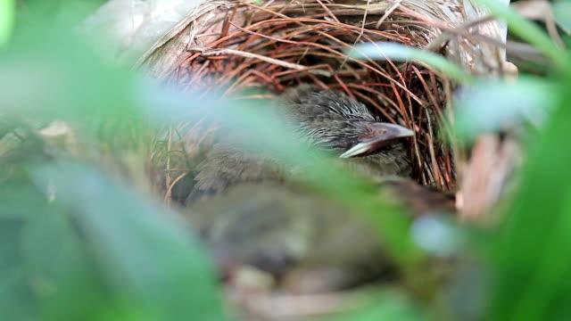 vídeos y material grabado en eventos de stock de recién nacido en el nido de pájaros - carrizo familia de la hierba