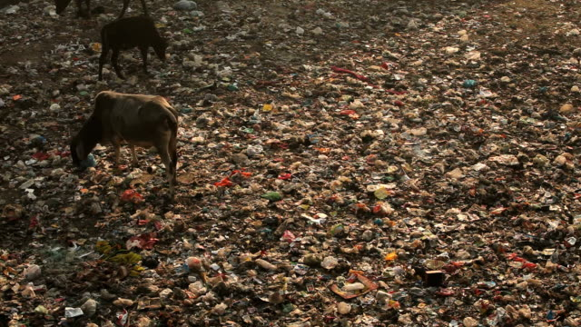new delhi local train station lawn - domestic animals stock videos & royalty-free footage