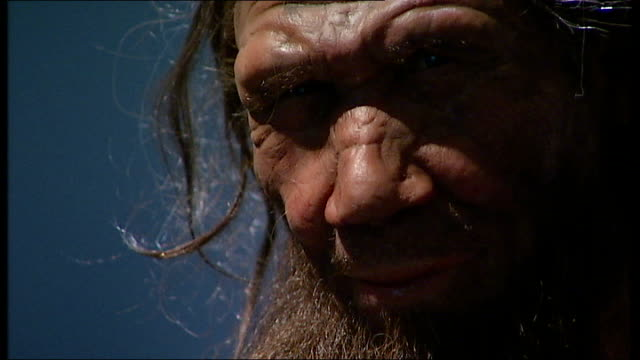 new evidence that neanderthals and humans co-existed for longer than previously thought; england: london: natural history museum: int gvs model of... - museum stock videos & royalty-free footage