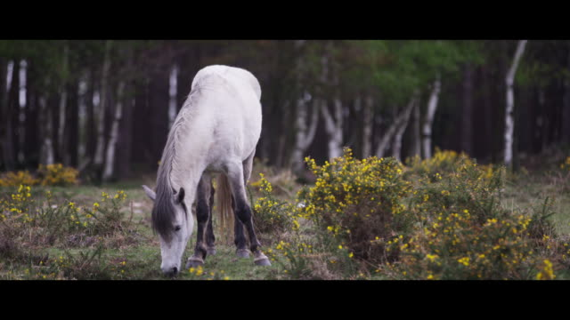 a new forest pony eating - new forest stock videos and b-roll footage