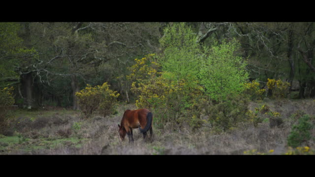 new forest pony - new forest stock videos and b-roll footage