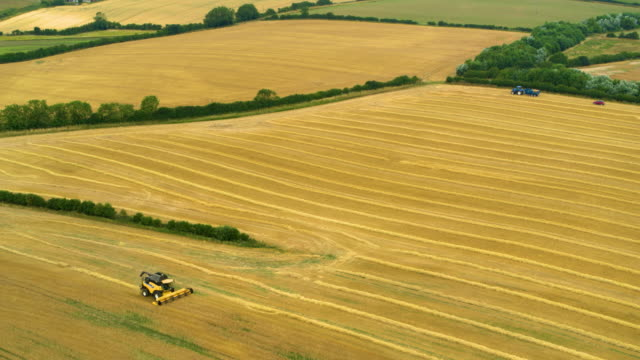 New Holland Combine Harvester, Harvesting In Field, Mill Lane, Cayton Bay, North Yorkshire, England