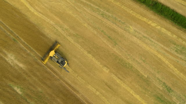 new holland combine harvester, harvesting in field, mill lane, cayton bay, north yorkshire, england - combine harvester stock videos & royalty-free footage