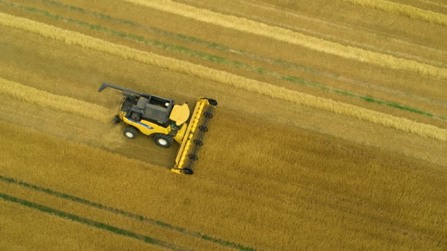 new holland combine harvester, harvesting in field, mill lane, cayton bay, north yorkshire, england - orzo video stock e b–roll