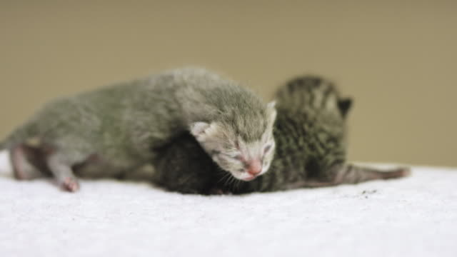 new kittens - soft blanket stock videos and b-roll footage