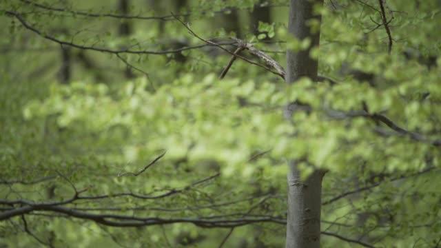 neue blätter rascheln im wind - ast pflanzenbestandteil stock-videos und b-roll-filmmaterial