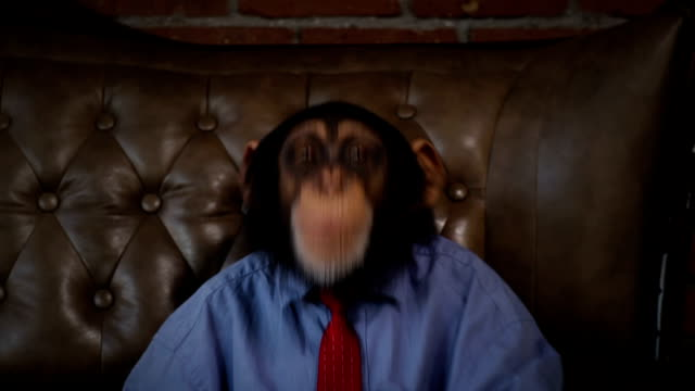 new monkey crazy office boss fooling around - primate stock videos and b-roll footage