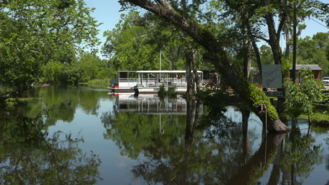 wgno new orleans louisiana us louisiana swamp tour with cajon pride tours on wednesday june 5 2017 - plant attribute stock videos and b-roll footage